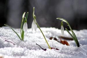 springoutlook_vid_480